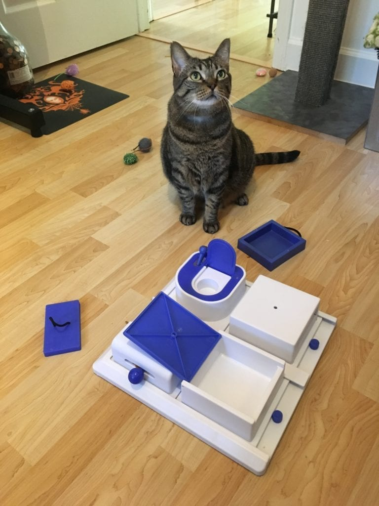 A cat with various food puzzles