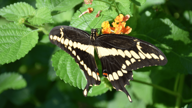 closeup of a butterfly on a flower