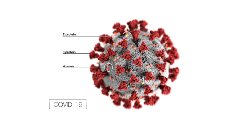 image of COVID-19 virus showing coronas with labels depicting each part